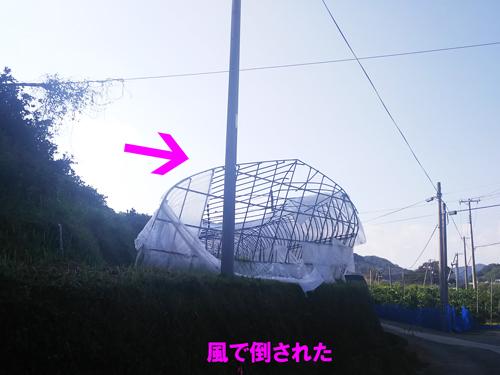 2018年台風21号,被害