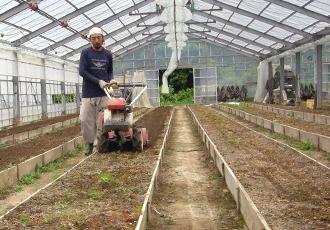 カーネーション栽培の一年
