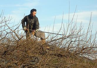 南高梅栽培の一年